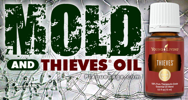 Mold and Thieves Oil